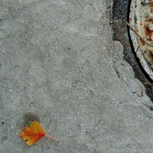 autumnleafwatermark