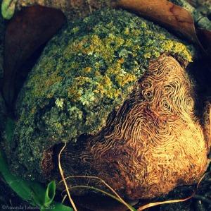 treerootcpwatermark